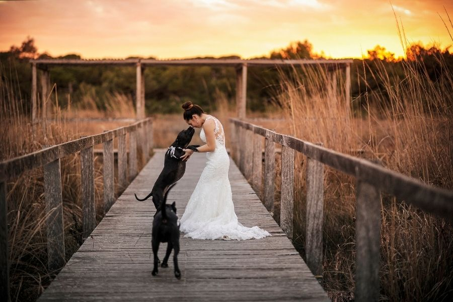 Bride hugging her wedding dog on a bridge with a sunset